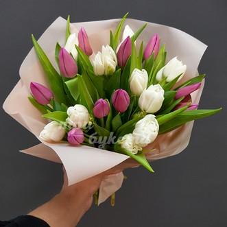 21 белый и розовый тюльпан