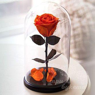 Оранжевая роза в колбе Premium 26 см