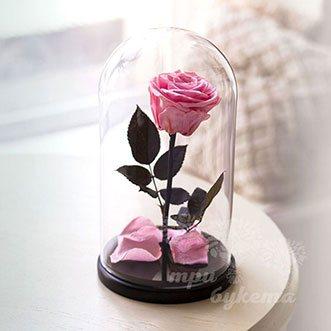 Розовая роза в колбе 26 см